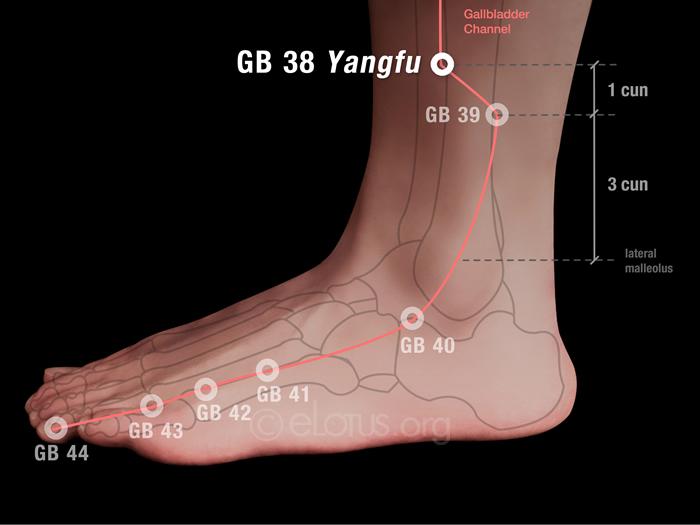 Yangfu (GB 38)   Master Tung's Acupuncture   eLotus CORE